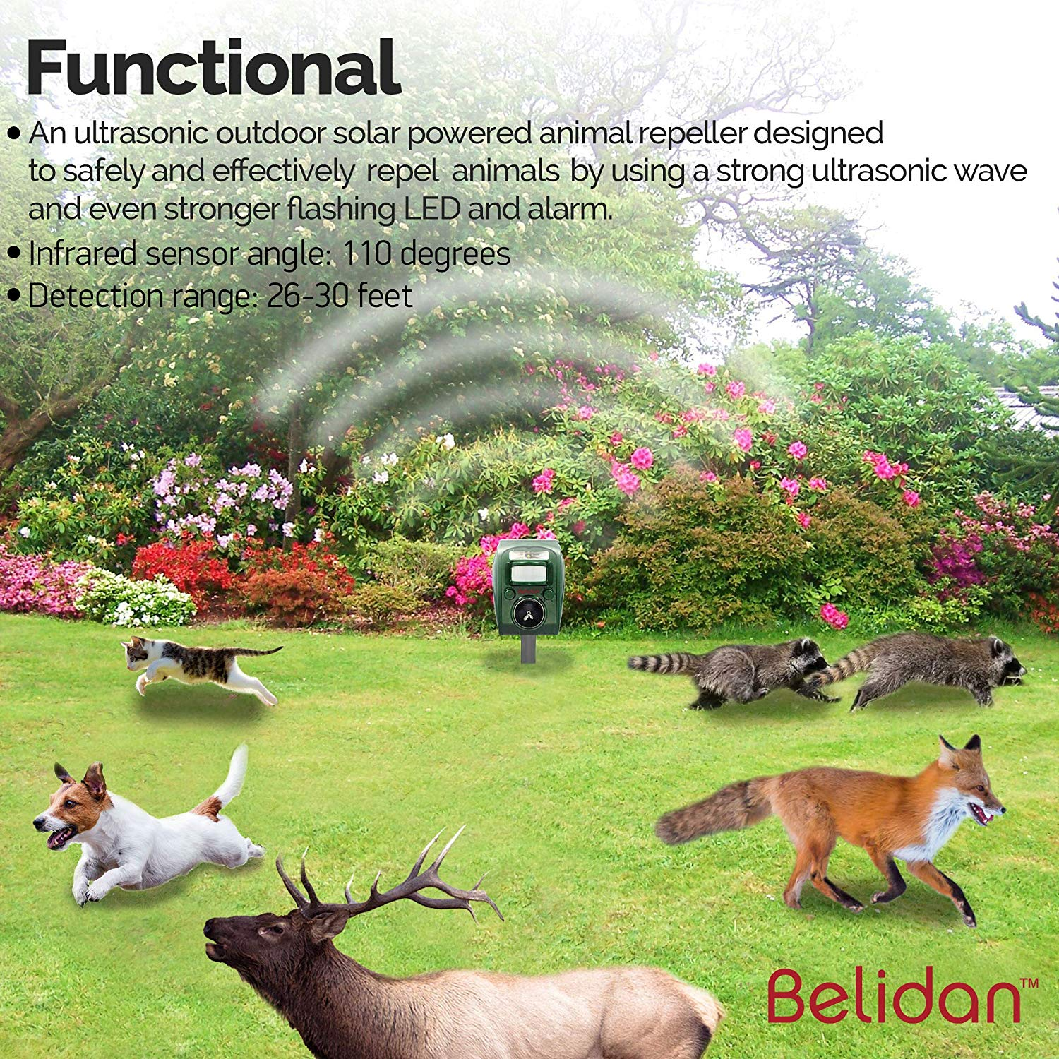 Belidan Animal Repellent Ultrasonic Outdoor Animal Repeller - Dog Rats  Raccoon Repellent Skunk Repellent Mice Cat Repellent - Animal Deterrent  Device